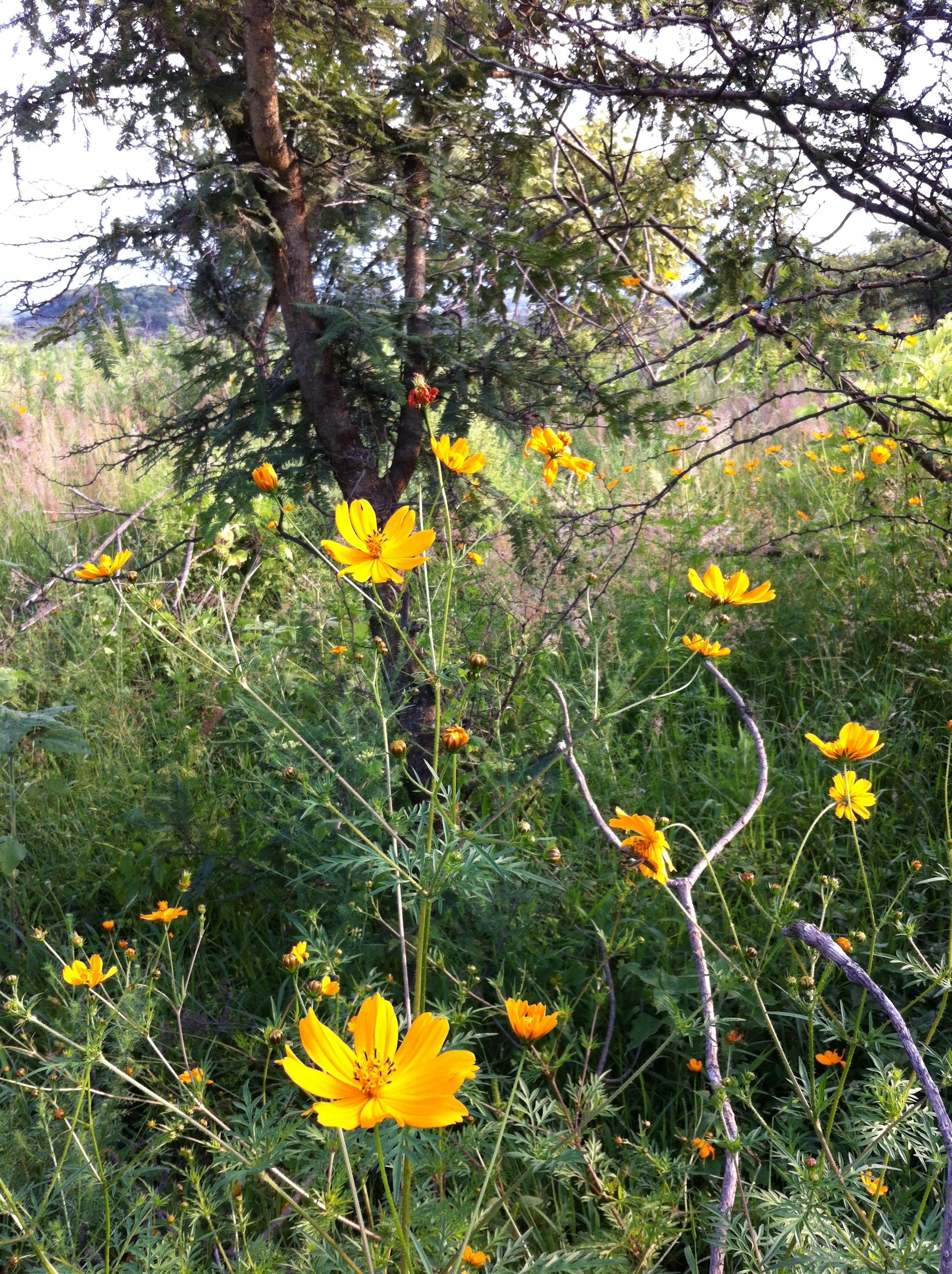 Brené Brown on Boundaries & Compassion